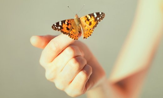 Butterfly Encounters