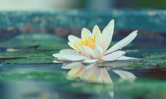 Oasis of Peace—Six Steps of Meditative Prayer